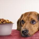 Как выбрать сухой корм для собаки?