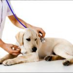 Какие услуги можно получить в ветеринарных клиниках?